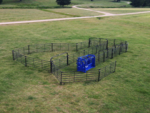 cattle handling equipment and fencing