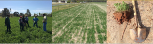 Cover photo for Alfalfa-Bermudagrass Hayfield Conference