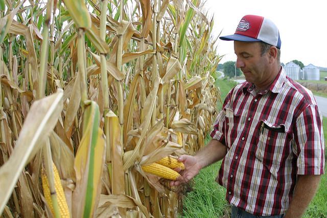 Image of farmer