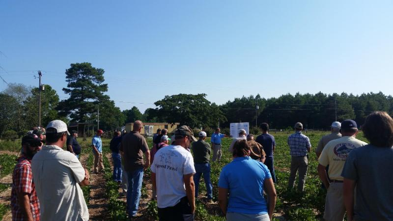 People in a field of crops