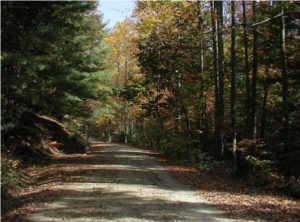 picture of dirt road with trees on each side