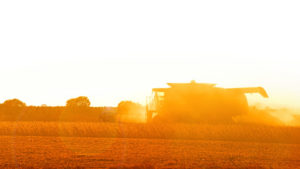 As the sun sets on a warm Fall day, a farmer harvests a soybean field.