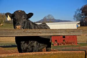 Cover photo for September/October 2020 Livestock News