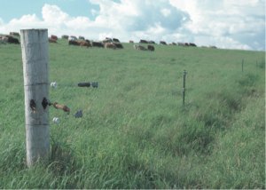 Cover photo for Emerging Forage Options for Eastern North Carolina