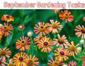 The Gardener's Dirt Newsletter picture of September Gardening Tasks